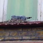 Pigeon Control London